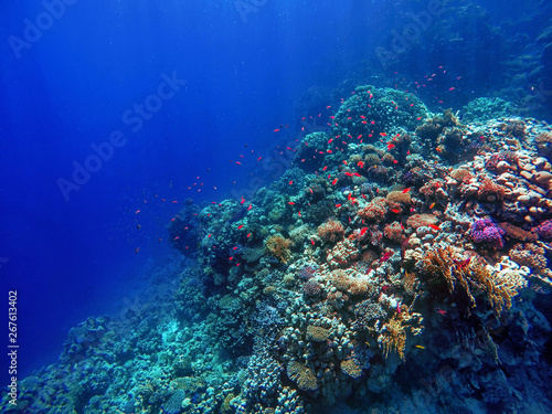 Poster Coral reefs colorful coral reef and bright fish