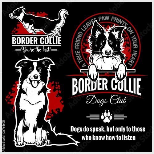 Cuadros en Lienzo Border Collie - vector set for t-shirt, logo and template badges
