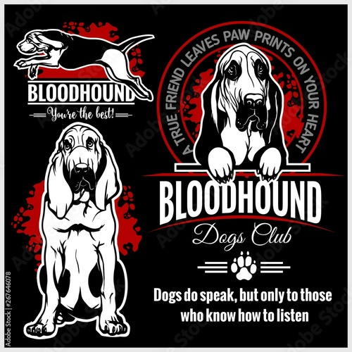 Bloodhound - vector set for t-shirt, logo and template badges Wallpaper Mural