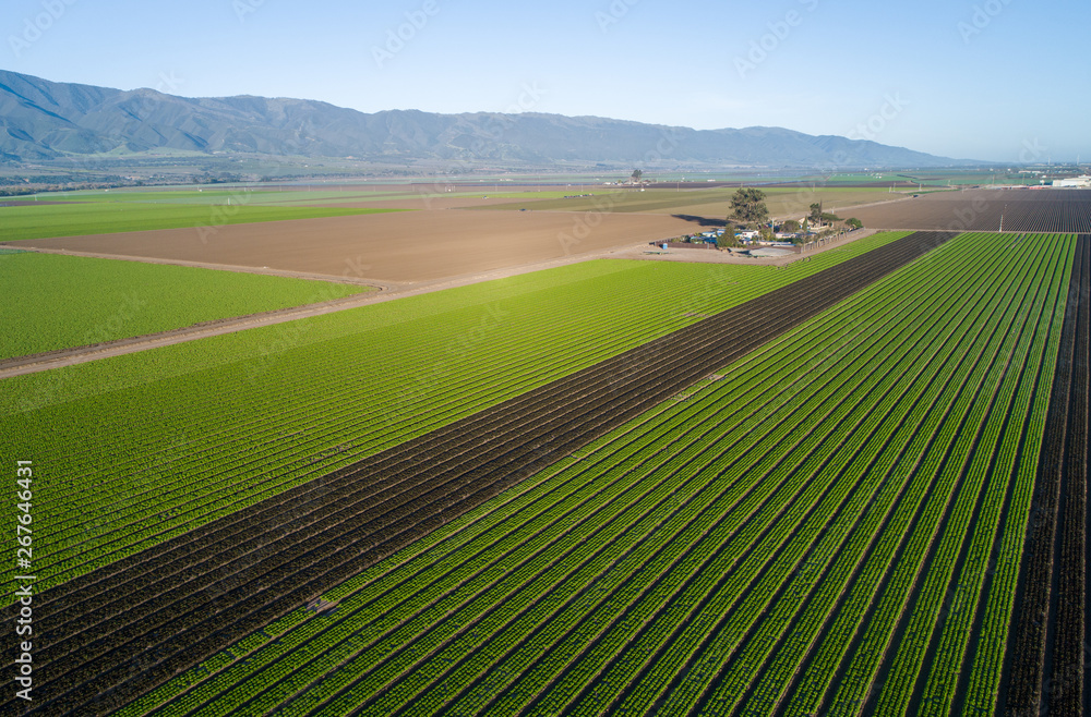 Fototapeta Aerial view of agricultural fields in California