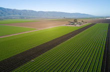 Aerial View Of Agricultural Fi...