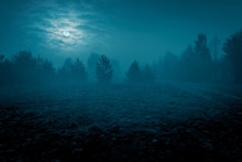 Mysterious Landscape In Cold T...