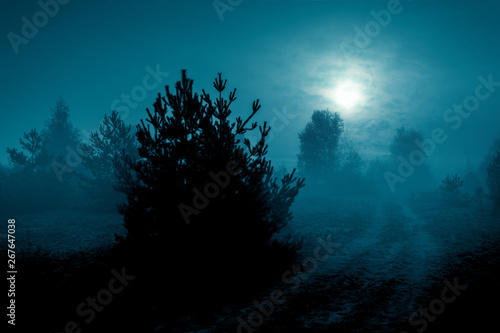 Türaufkleber Blau türkis Mysterious landscape in cold tones - silhouettes of the trees along night rural road under the full moon through dramatic cloudy sky.