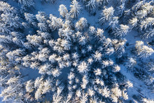 Germany, Bavaria, Aerial View Over Snowy Spruce Forest