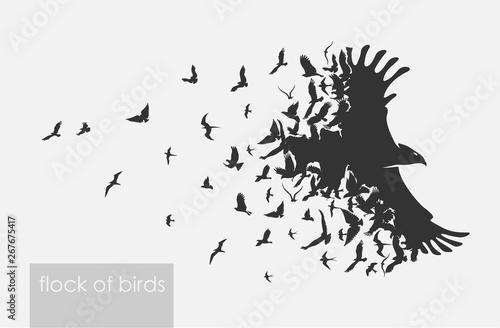 figures flock of flying birds on white
