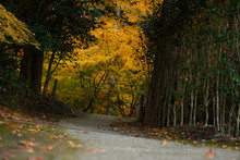 Golden Autumn In Japanese Forest