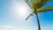 Palm tree and blue sky in Guadeloupe
