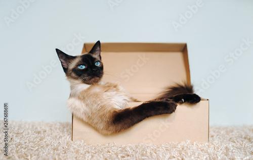 Fotografie, Obraz Rest of a cat in a cardboard box