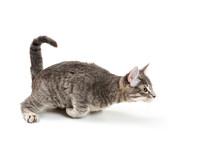 Funny Playful Kitten Ready To Pounce