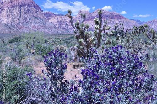 Violet desert