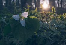 早朝の野幌森林公園の...