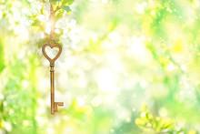 Vintage Gold Key On Branch Of ...