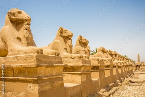 Spoed Fotobehang Egypte Ram-headed sphinxes line the road outside the temple in Karnak, Egypt