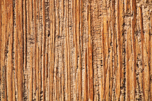 Photo sur Aluminium Texture de bois de chauffage Natural background. The texture of the bark of a tropical tree.