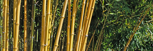 Poster Bamboe Bamboo in the forest