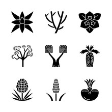 Desert Plants Glyph Icons Set