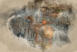 Watercolour painting of Beautiful greylag goose Anser Anser in wetland landscape - 267761086