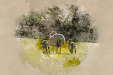 Watercolour painting of Beautiful landscape image of newborn Spring lambs and sheep in fields during late evening light - 267761208