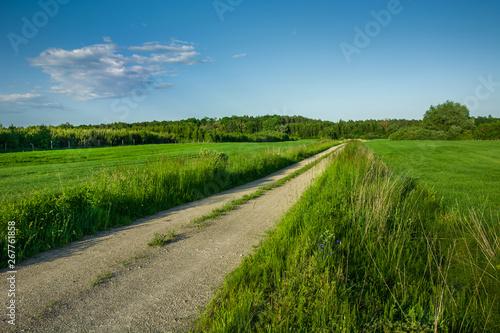 Foto op Plexiglas Weide, Moeras Gravel road through green fields, forest and cloud on blue sky