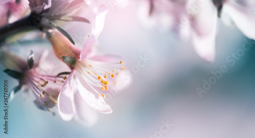 Photo  Blossoming almond on the branches background