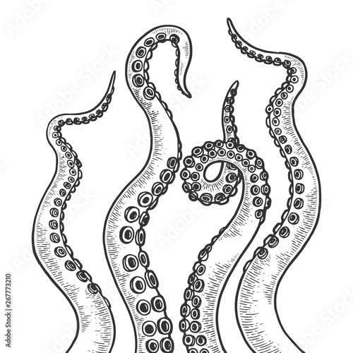 Photo  Octopus tentacle set sketch engraving vector illustration