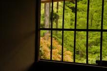 日本庭園の風景