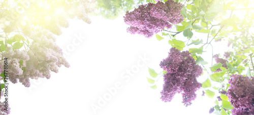 Photo sur Aluminium Lilac Blooming lilac flowers