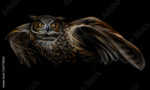 Poster Uilen cartoon Long-eared owl in flight. Color image on black background