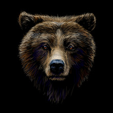 Color Portrait Of A Brown Bear Looking Ahead Against A Black Background.