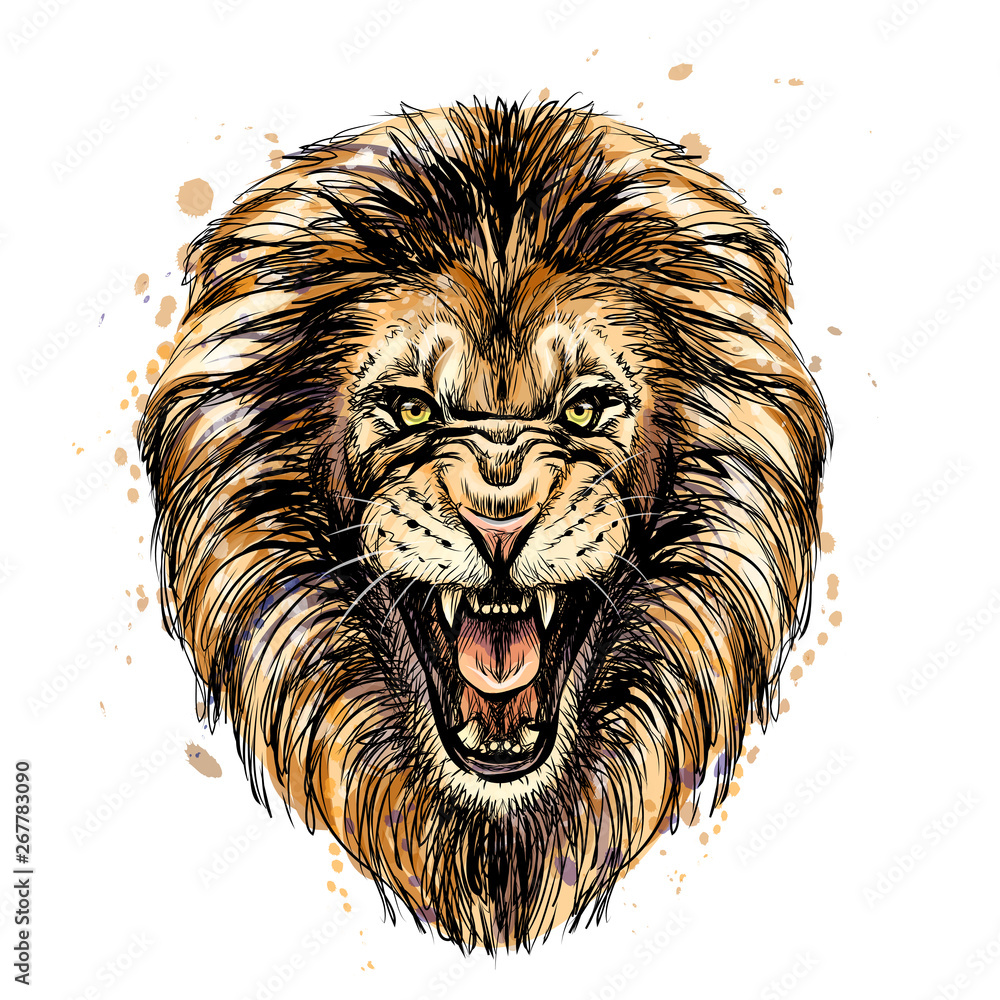 Fototapeta Sketchy graphic color portrait of a roaring lion on a white background with splashes of watercolor