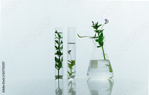 glass flask and test tubes with green purple wild flower for medical health or c Canvas Print