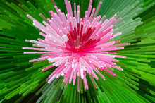 Pink Explosion With Red Middle