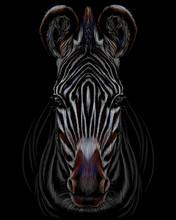 Realistic Color Portrait Of Zebra On A Black Background.