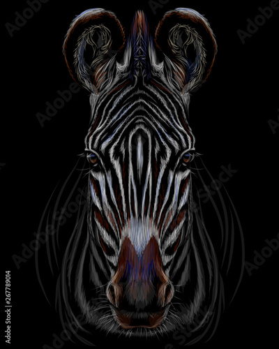 Canvas Prints Zebra Realistic color portrait of zebra on a black background.