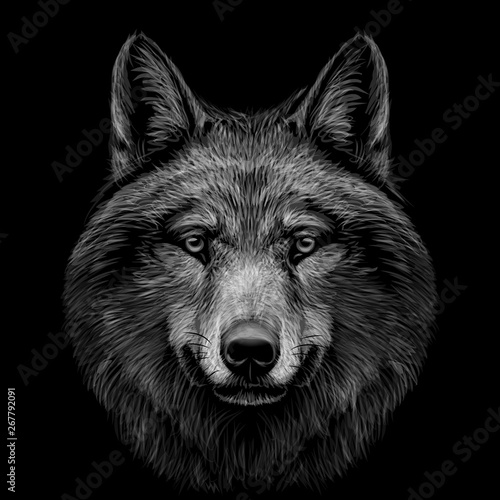 Fotografía  Monochrome, black and white, graphic portrait of a wolf's head on a black background