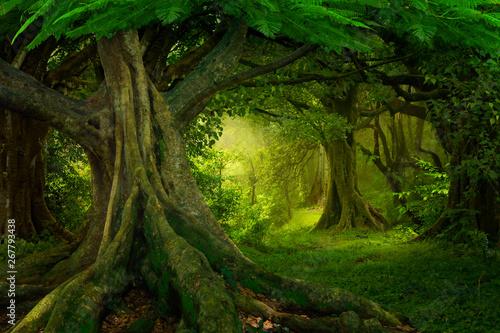 Fototapeta Asian rainforest obraz na płótnie