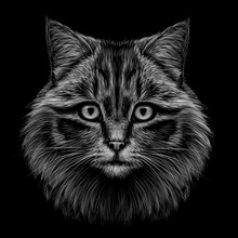 Black And White, Monochrome, Hand-drawn, Multicolored Portrait Of A Cat Looking Forward On A Black Background.