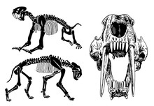 Graphical Set Of Skeletons Of ...