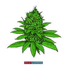 Hand Drawn Marijuana. Leaves A...