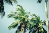 Coconut palm tree foliage under sky. Vintage background. Retro toned poster. - 267803669