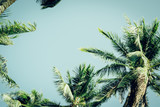 Coconut palm tree foliage under sky. Vintage background. Retro toned poster. - 267803803