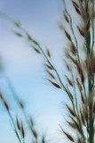 Abstract floral blurred background. Summer meadow macro photography and blue sky. - 267805867