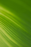 Abstract floral blurred background. Tropical palm leave backdrop - 267810043