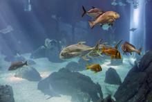 Aquaqium Sea Fish Passing By