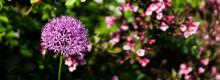 Beautiful Purple Flower Nature Background
