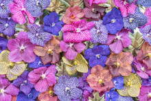 Multicolor Orchid Flowers As Natural Background
