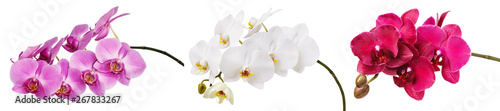 Fotobehang Orchidee Three isolated branches of a beautiful blooming delicate pink, white and burgundy orchid, having a yellow color on the lower petals