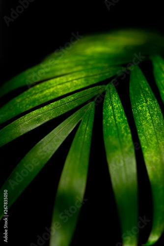 Poster Palm tree Palmeira Verde Árvore Planta Macro Folhas Luz