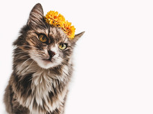Charming Kitten With Yellow Flowers On A White Background. Close-up, Isolated. Beautiful Photo With Space For Your Inscriptions. Pet Care Concept