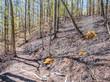 Waldbrand in einem Wald